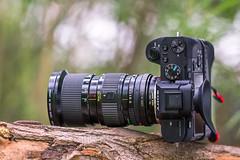 Canon nFD 35~105mm ƒ/3.5 Macro on SONY ⍺7II (.: mike | MKvip Beauty :.) Tags: sony⍺7markii sony⍺7ii sonyilce7m2sonyalpha7m2 sonyalpha sony alpha emount ⍺7ii ilce7m2 sigmaex150mmƒ28apomacro sigma150mmƒ28macro sigmaex 150mmƒ28 150mm ƒ28 os adapter metabonesefemounttsmart metabonestmarkiv metabones markiv canonefe afadapter eftoemount efnex sony⍺6300 sonyilce6300 sonyalpha6300 ⍺6300 ilce6300 canonnfd35~105mmƒ35macro canonnewfd35~105mmƒ35ma canonfd canonnfd canonnewfd 35~105mmƒ35 canon vintagelens vintagezoom zoomlens zoom manuallens manualondigital manual manualfocusing manualexposure availablelight naturallight backlight backlighting primelens prime handheld shallowdof bokeh bokehlicious beyondbokeh extremebokeh smoothbokeh closeup lens lensporn camera gearshot gearporn wörthamrhein germany europe mth mkvip sigmaex150mmƒ28apomacroexdgoshsm metabonesefemounttsmartadaptermarkiv canonnewfd35~105mmƒ35macro