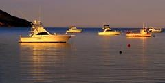 BATHED in LIGHT (Lani Elliott) Tags: scene scenic water bay boats light glowing radiant ripples reflections lanielliott scenictasmania view australia tasmania eastcoast gorgeous brilliant wow