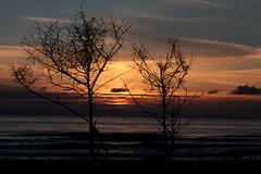 Yachats Sunset (dsgetch) Tags: sierralupeconstruction yachats centraloregoncoast oregoncoast lanecounty oregonsunset oceansunset beachsunset coastsunset shadows cascadia pnw pacific northwest pacificnorthwest