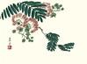 Silktree (Japanese Flower and Bird Art) Tags: flower silktree albizia julibrissin fabaceae keigaku harada ukiyo woodblock print japan japanese art readercollection
