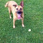Bella at the park thumbnail