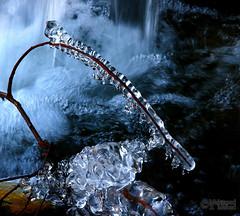 Icy Fall (Mahmoud R Maheri) Tags: ice frozen water iran sepidan river bubbles twigs ardakan