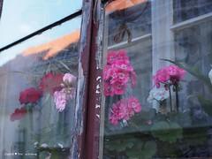 upper-town-window_2