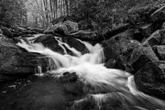 River Runs (John Cothron) Tags: americansouth blountcounty cpl canoneos5dmkiv cothronphotography distagon2128ze distagont2821ze dixie eastsouthcentralstates greatsmokymountainnationalpark johncothron lynncampprong middlepronglittleriver middleprongtrail silverefexpro2 southernregion tennessee thesouth townsend tremont us usa unitedstatesofamerica volunteerstate zeissdistagont2821ze bw blackandwhite circularpolarizingfilter clouds cloudyweather creek flowing forest freshwater hiking landscape longexposure monochrome morninglight nature outdoor outside river rock scenic spring stream water img17472170519v01 ©johncothron2017 riverruns
