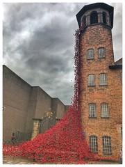 The weeping tower (jim-green777) Tags: citycentre 2017 installation art 1stworldwar memorial england britain uk derbyshire paulcummings poppies silkmill derby