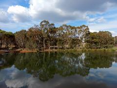 Land of plenty (LeelooDallas) Tags: western australia bannister landscape tree lake eucalyptus forest bush sky cloud dana iwachow nikon s9200