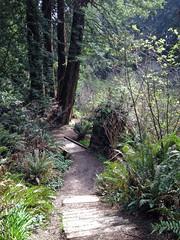 SequoiaPark032413g (homeboy63) Tags: spring 2013 humboldt sequoiapark eureka fauna
