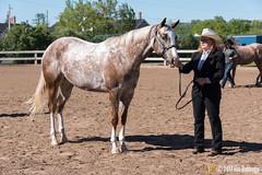 JBC_8110.jpg (Jim Babbage) Tags: krahc annualshow appaloosa horses