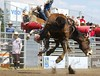 Seeing Double (Bronc's name) (cowgirlrightup) Tags: albertarodeo bronc seeingdouble cowgirlrightup