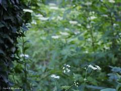 Miroslavac trail