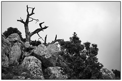 Mountains near Anatoli (Crete) (unukorno) Tags: lasithi kreta griechenland anatoli bw sw blackwhite monochrome frame noise nature trees grece