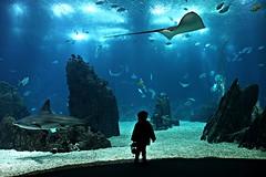 Blue world! (Jorge Cardim) Tags: lisboa portugal lisbon oceanarium oceanário blue azul