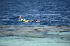 DSC_0245 (russellfenton) Tags: egypt marsaalam nikon nikon7200 7200 corayabeach steigenberger snorkelling sea boat