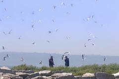 Audubon society members working on program Puffins (irina_escoffery) Tags: seaside egg rock island maine audubon society puffins birds seagulls