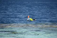 DSC_0244 (russellfenton) Tags: egypt marsaalam nikon nikon7200 7200 corayabeach steigenberger snorkelling sea boat