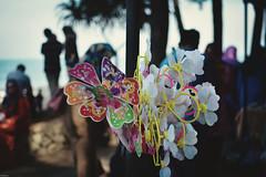 Toy Flower (dibakardipu) Tags: flower toy kuantan beach seabeach malaysia bokeh closeshot