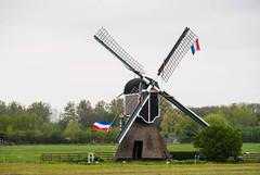 Windmill (Little Miss Clever Trousers) Tags: tulpen bollenstreek flowers tulipfields southholland