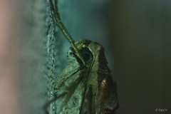 perfil (Vast'n Photos) Tags: insetos mariposas borboletas
