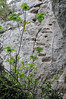 Ancient curved steps on the rock (st.delis) Tags: σκαλοπάτια βράχοσ συρματόσχοινο πάρνηθα αττική ελλάδα steps rock wirerope parnitha attica hellas