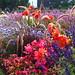buntes Blumenbeet