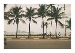 folhas da palma (Francisco Olivares L.) Tags: brasil ipanema brazil beach playa praia palms street people travel photo analog film