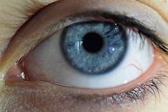 blue eyes (Tiny Raissa) Tags: macro eyes blue eye macrolens nikon3300 nikon nikonitalia cat babycat animals feline