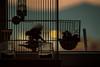 (iaso) Tags: freedom life birds nocage animals sunset livorno iasilli iaso italia canon longexp