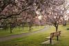 Happy Bench Monday (Karl's Gal) Tags: stalbertbotanicalpark hbm garden trees blossoms spring karlsgal bench