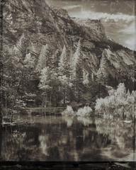 Mirror Lake Area, Yosemite National Park (bdrameyphotography) Tags: yosemitenationalpark mirrorlake yosemitevalley california tintype bw blackandwhite nikond810 sepiatone