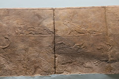 May 10: 79 Lion Hunt Reliefs (Aquafortis) Tags: art london england museums assyrian