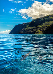 Dolphins on the Na Pali Coast (docoverachiever) Tags: kauai dolphins ocean cliffs water spinnerdolphins scenery nature hawaii sea clouds