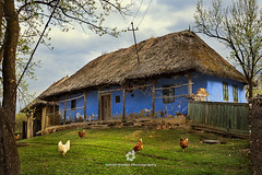 Traditional Blue House in Szék, Transylvania (fesign) Tags: animals architecture blue buildingexterior chicken colourimage countryside day europe farm fence freerange freerun gate grass green hen home horizontal house humaninterest hungariantradition livestock nopeople outdoors photography poultry romania roof ruralscene thatchroof traditional tranquility transylvania tree village