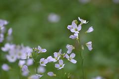 Pastel (dfromonteil) Tags: fleurs flowers bleu blue green vert colors couleurs macro bokeh nature quiet calme light lumière purple violet pastel