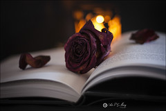 Proyecto 140/365 (Art.Mary) Tags: rosa rose flor fleur flower marchita muerta morte dead sere fané bodegón stilllife naturemorte canon proyecto365