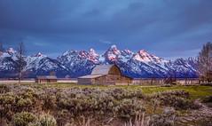 Morning Spring at the Moulton Barn (GrandTetonNPS) Tags: grandteton mormonrow barn nationalpark moultonbarn wyoming