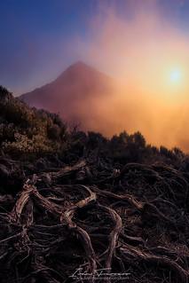 Raíces del Teide