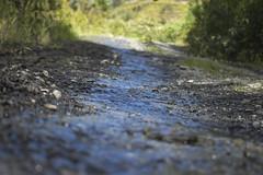 Arroyo (Cenit Diaz) Tags: arroyo naturaleza momentos movimientos piedras vegetación puno perú sandia