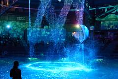 DSC01891 (Jun.Ohashi) Tags: aquaparkshinagawa aquarium shinagawa アクアパーク品川 品川 水族館 港区 東京都 日本 jp sony ソニー ilce9 α9 sonyalphaa9 a9 alpha9 tamronspaf2875mmf28xrdildasphericalifmacroa09 tamron タムロン sp 2875mm f28 di ld aspherical if macro a09