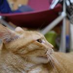 #cat #chat #貓 thumbnail