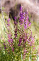 River flowers (kud4ipad) Tags: 2016 prokhorovka flower ukraine outdors vivitar90mmf25macro