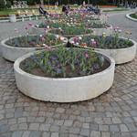 Tulpen, South Park, Sofia (126LIEBE_6687) thumbnail