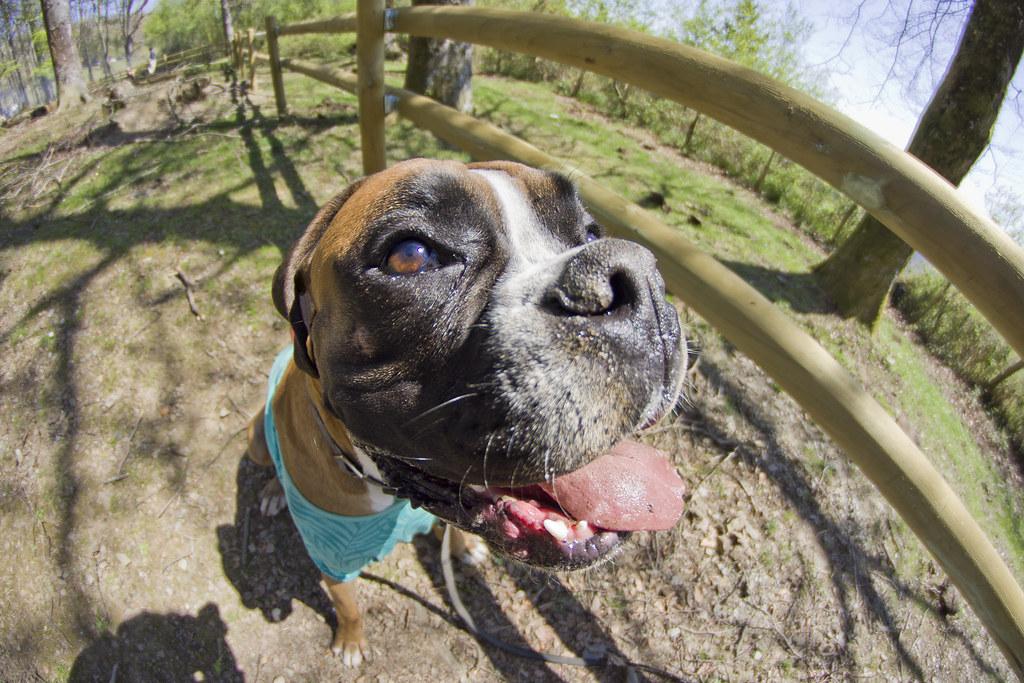 Toledo Pet Farm Dog Park