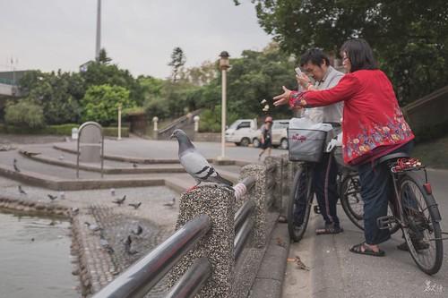 鴿與餵鴿人牠孤傲的佇立著,俯瞰同伴爭食,牠一定覺得自己是清流鴿。