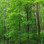 Zindel Park Trails (5) thumbnail