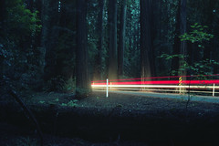 (patrickjoust) Tags: richardsongrovestatepark california highway101 redwoods redwoodforest carlighttrails forest dark fujicagw690 kodakportra160 6x9 medium format 120 rangefinder 90mm f35 fujinon lens c41 color film manual focus analog mechanical patrick joust patrickjoust usa us united states north america estados unidos rural country night after cable release tripod long exposure