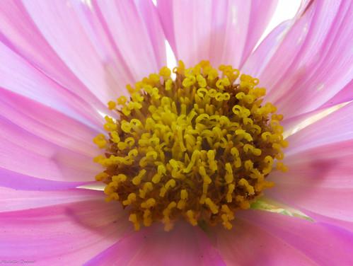 Flower Sex Parts