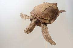 Sea turtle (kei Watanabe) Tags: origami turtle