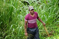 Sri Lanka, tea pickers (3) (walterkolkma) Tags: srilanka tea pickers teapickers centralhighlands nuwaraeliya strathdon teaestates women laborers tamils sonya6300