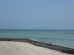 KeyWestDay110 (alicia.garbelman) Tags: florida keys keywest birds seagulls