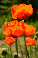 DSC_8778 (facebook.com/DorotaOstrowskaFoto) Tags: ogródbotaniczny kwiaty powsin warszawa